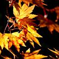 秋の煌めき