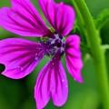 写真: 夏のお花が