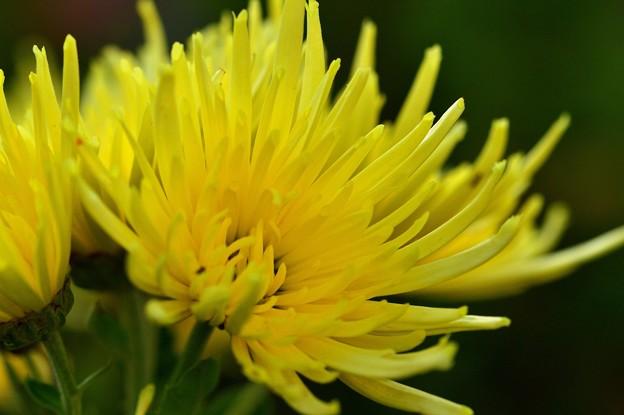 寒さに強い花たち
