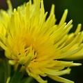 写真: 寒さに強い花たち