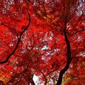 写真: 紅葉三昧