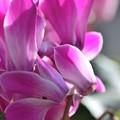 写真: 今一番元気な花