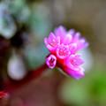 写真: 春 彩