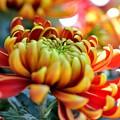 写真: 屋内花壇にて