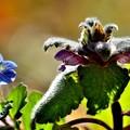 写真: 春を共演