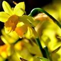 写真: 春を呼ぶ色