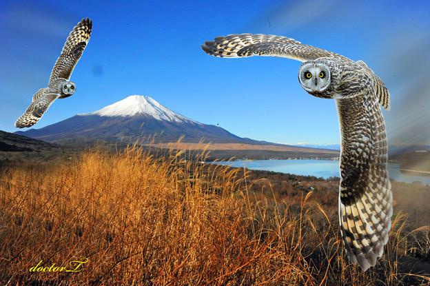 富士山とコミミズク