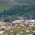新幹線とアサギマダラ