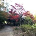 Photos: 森林植物園2017