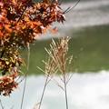 写真: 秋を見つけて