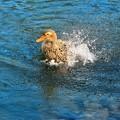 Photos: 水浴