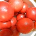 写真: 家庭菜園 トマト