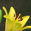 Photos: 咲きたて♪