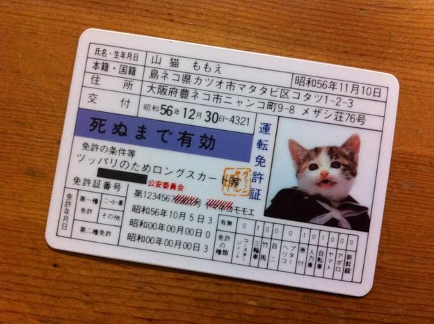 なめ猫~♪