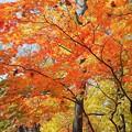 秋の公園散歩