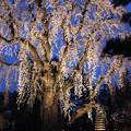 Photos: 庭園内