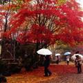 写真: 横谷観音の紅葉