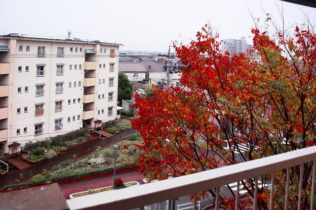 今秋の窓の外