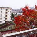 写真: 今秋の窓の外