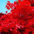 写真: 犬山寂光院の紅葉(2)