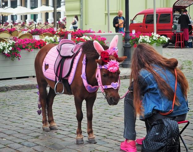 オデッサのポニー  Pony in Odessa,Ukraine
