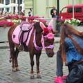 写真: オデッサのポニー  Pony in Odessa,Ukraine