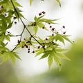 写真: 新緑の季節1