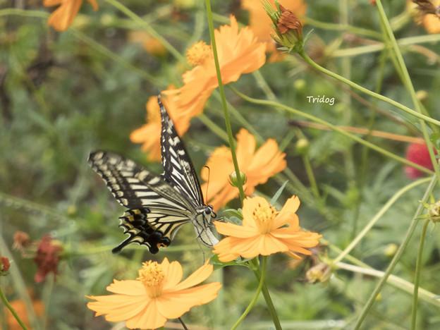 キバナと蝶