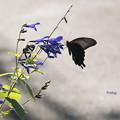 写真: 黒と紫