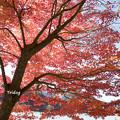写真: 丹沢湖の紅葉