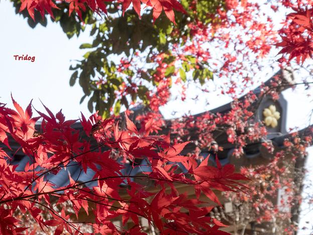 Photos: 深大寺と紅葉