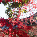 写真: 深大寺と紅葉