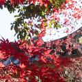 深大寺と紅葉