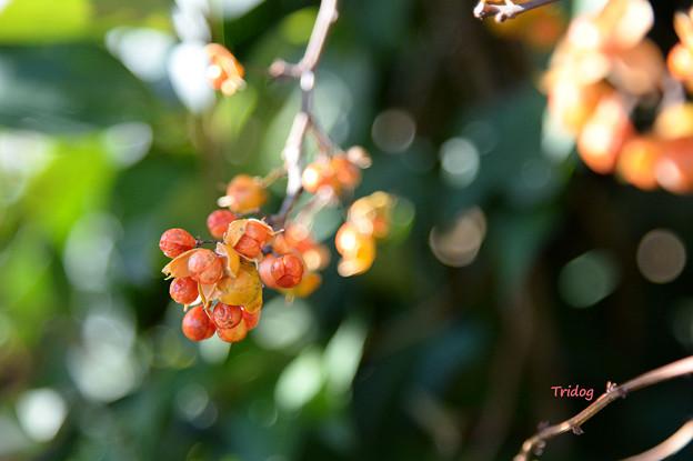 オレンジ色の実