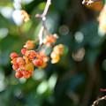 写真: オレンジ色の実