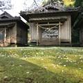 Photos: 神社の桜