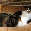写真: サヤ&ミヤ