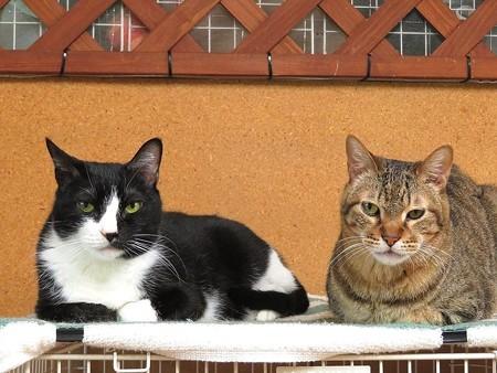 ゼブラ&ムース「仲良しなんだぜ」