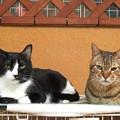 写真: ゼブラ&ムース「仲良しなんだぜ」