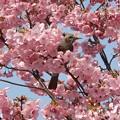 桜&日日日日2