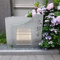 石碑と紫陽花