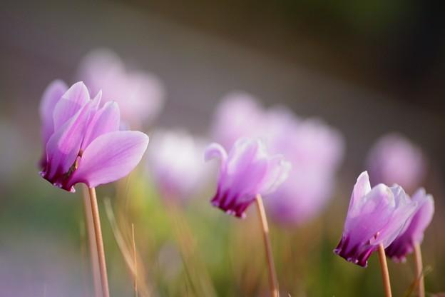 写真: うす紫の~