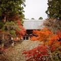写真: 紅葉 1