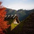 茅葺き屋根の家 3