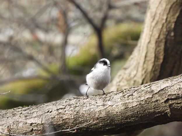 写真: 野鳥 1