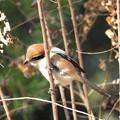 野鳥 11