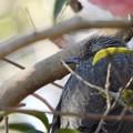 野鳥 12