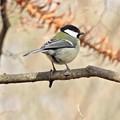 野鳥 16