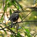 写真: 野鳥 19