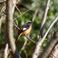 写真: 野鳥 20
